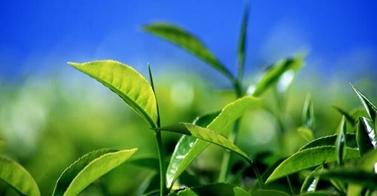 leafe_sky